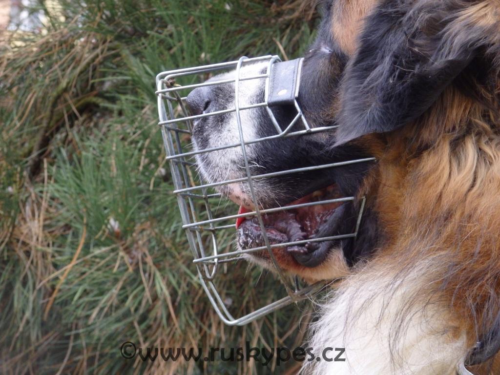 Košík nesmí být natěsno, pes musí mít možnost otevřít tlamu a ventilovat.