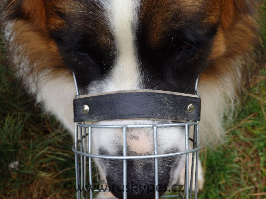 Nasazený košík by psovi neměl tlačit na nosní houbu, ani by ho neměl dřít na skráních (kovový košík v případě potřeby llze rukou roztáhnou a tím ho rozšíříte, takže i pes s opravdu velkou hlavou ho může nosit).