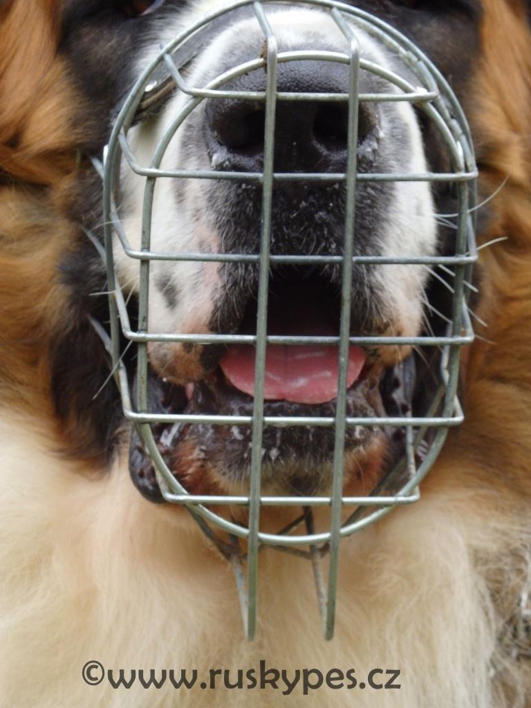 Pes by se měl s nasazeným košíkem zvládnout i napít nebo přijmout pamlsek.