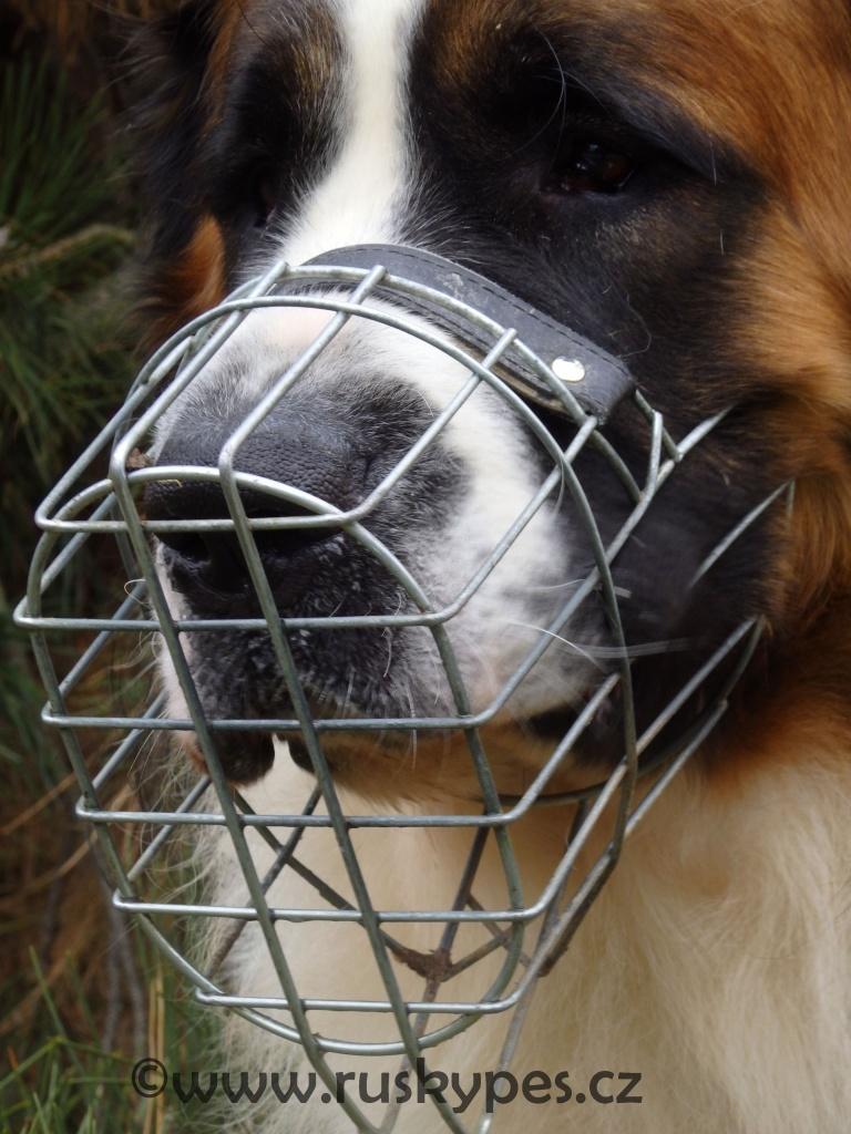 Košík nesmí psa dřít ani škrtit, měl by mu být při nošení pohodlný a ne ho stresovat.